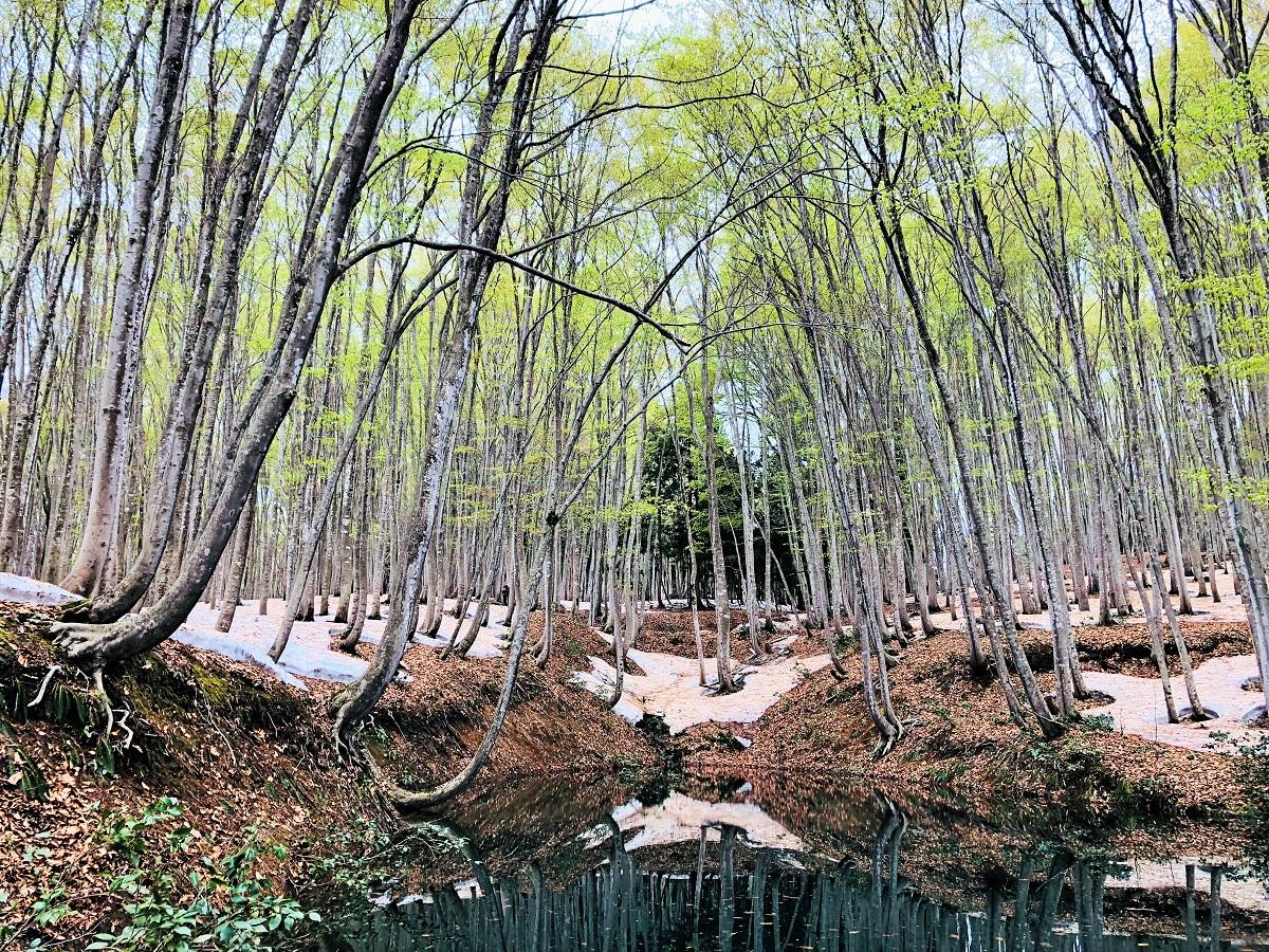 春の美人林